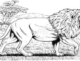 zoo scene coloring pages free coloring today takewill