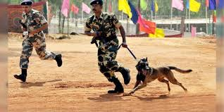 belgian shepherd killed a sniffer dog killed in maoist blast in jharkhand dogexpress