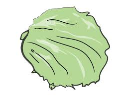 lettuce food illustration free clip art material