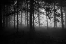 adorable hdq backgrounds spooky forest 47 spooky forest 4k