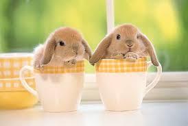 bunnies for easter bunny themed nursery