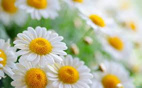 karen florist flower facts