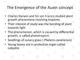 What Is Growth Movement Of A Plant Toward Light Called Auxin