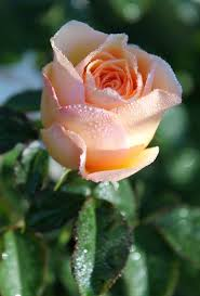 beautiful garden movie 481 best god album flowers images on pinterest beautiful roses