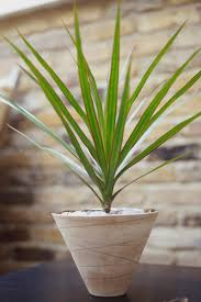 Best Low Light Indoor Plants by Small House Plants Artificial Potted Flowers Uk The Best Flowers