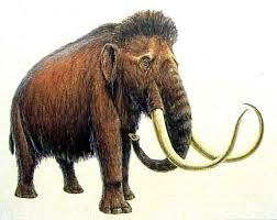 woolly mammoths verge brought extinction
