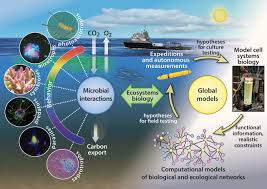 rethinking the marine carbon cycle factoring in the multifarious