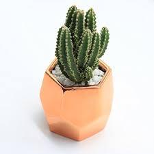 cactus home decor purzest cacti pots ceramic succulent planter modern home decor