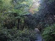 Mt Lofty Botanic Gardens Mount Lofty Botanic Garden