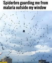 Spider Bro Meme - spider memes starecat com