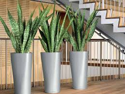 plants that grow in dark rooms 5 plants that thrive in dark rooms the plant guide