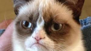 Grumpy Kitty Meme - grumpy cat meme inside the 792 000 lawsuit