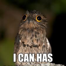 Potoo Bird Meme - potoo bird meme