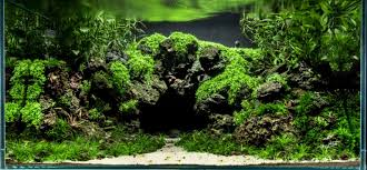 Aquascape Layout Planted U2013 Aquarium Architect Custom Fish Tanks Sydney