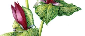 20 tips for painting better botanicals how to artists