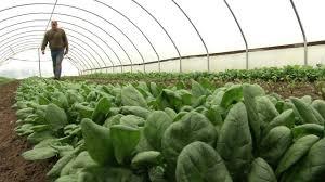 winter greenhouse farming youtube