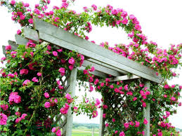 Arbors And Trellises Best Rose Trellis Ideas