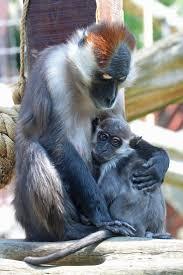 54 best monkey business images on pinterest monkey business