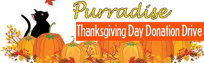 thanksgiving day purradise donation drive berkshire humane society