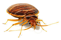 Bed Bug Cleaning Services Bed Bug Control 249 Affordable Heat Treatments Local Expert