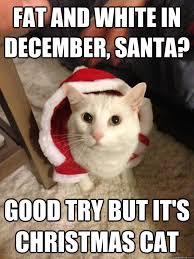 Christmas Cat Memes - christmas cat memes quickmeme