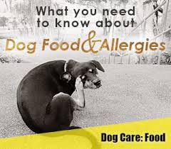 how to test if your dog is allergic to chicken u0026 other food dog
