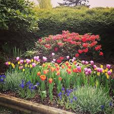 Flower Bed Plan - 69 best gardening tulips irises u0026 other bulbs images on