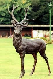 willowbrook park deer parks bowood house the s corgis
