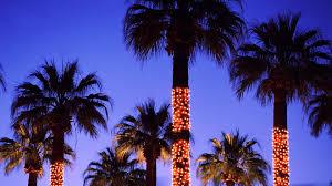 palm tree christmas tree lights palm tree christmas lights 267446 walldevil