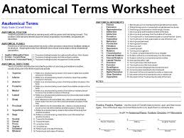 Planes And Anatomical Directions Worksheet Answers Terminology Anatomical Position Directional Terms And