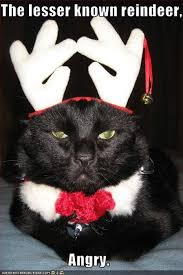 Merry Christmas Cat Meme - pin by wayne dew on christmas cats pinterest cat funny cat