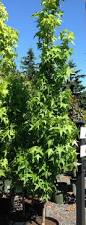 ten trees and shrubs for a small city garden u2014 swansons nursery