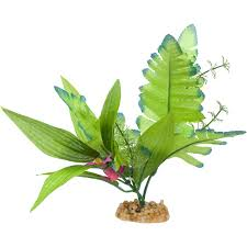 aquarium plants for sale fish tank u0026 aquarium plants petco