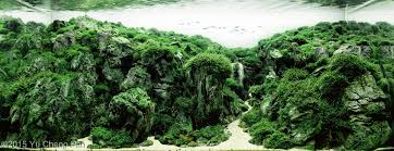 Most Beautiful Aquascapes Aquascaping Inspiration Tips And Tricks U2022 Aquascaping Love