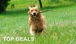 amazon ca black friday deals now available amazon ca pet supplies