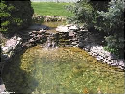 unique koi pool water gardens backyard escapes