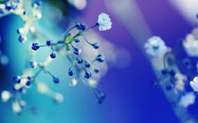 blue flowers blue white flower close up wallpaper hd blue is