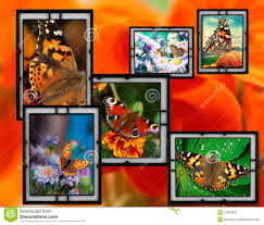 frames with flowers and butterfly royalty free stock photo image