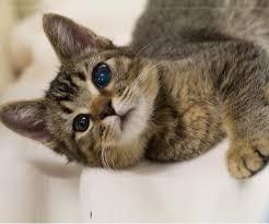 Blind Cat Sanctuary Adopt A Less Adoptable Pet Week Petfinder