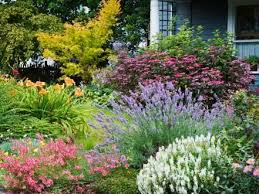 best 25 inexpensive landscaping ideas on pinterest landscaping