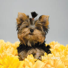 Cute Dogs Wallpapers by Puppies Free Modern Dog Wallpaper Modern Dog Magazine