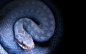 snake wallpapers https i pinimg 736x a2 40 2a a2402a542fb5ec5