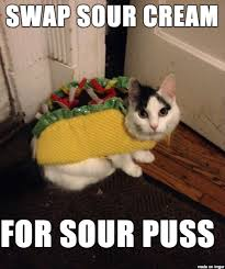 Halloween Cat Meme - humiliate your cat with the 10 most ridiculous costumes for