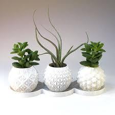 indoor tree pots instavite me