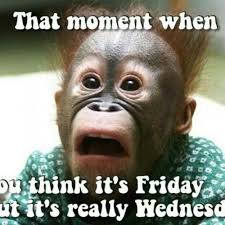 Hump Day Memes - 54 best wednesday memes images on pinterest good morning hump day