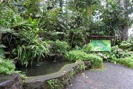 Up Los Banos Botanical Garden Makiling Botanical Gardens Dairy Husbandry Up Los Baños A Momma