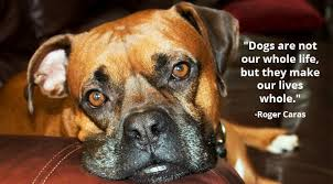 boxer dog sayings 11 inspirational quotes about dogs that will make your day rover com