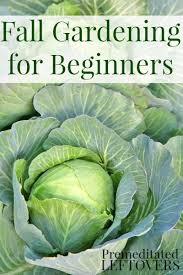 fall vegetable gardening for beginners tips for getting started