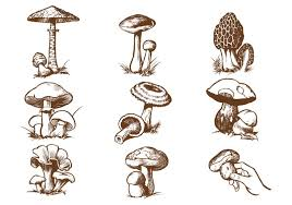 hand drawn mushroom vector pack download free vector art stock