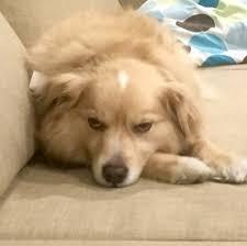 Annoyed Dog Meme - dog